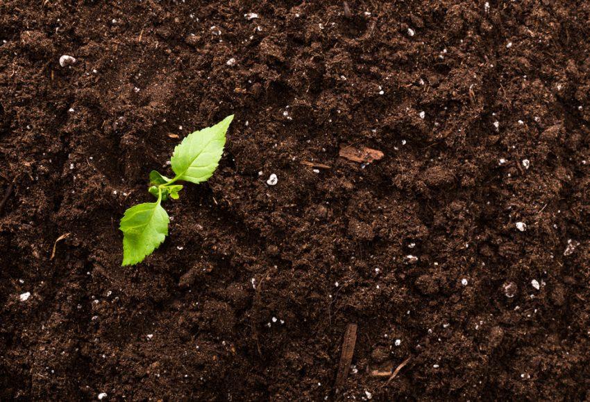 zrychlene kompostovanie rastlinka
